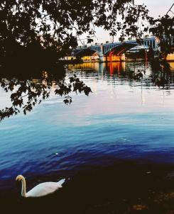 Pont d'Asnières - swan lake style