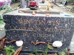 Rin Tin Tin la grande vedette du cinéma